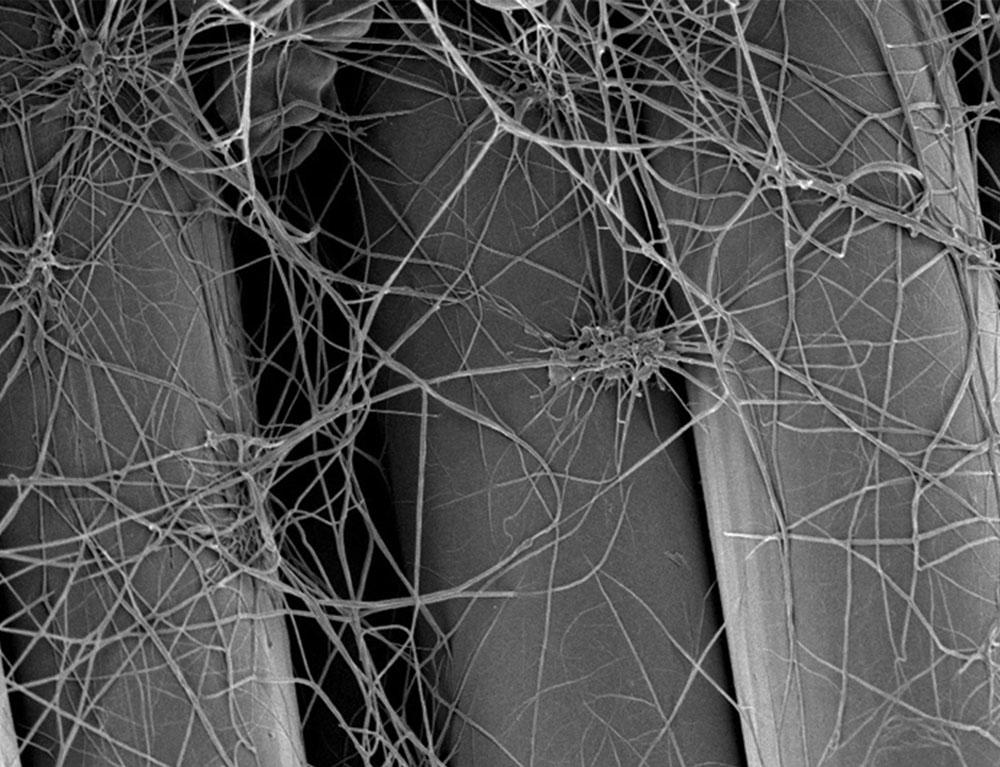 Polymer Fibres Image Left